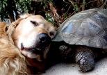 Perro y tortuga